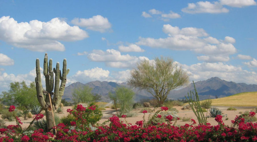 City of Scottsdale Seeks Firm for Tourism Plan
