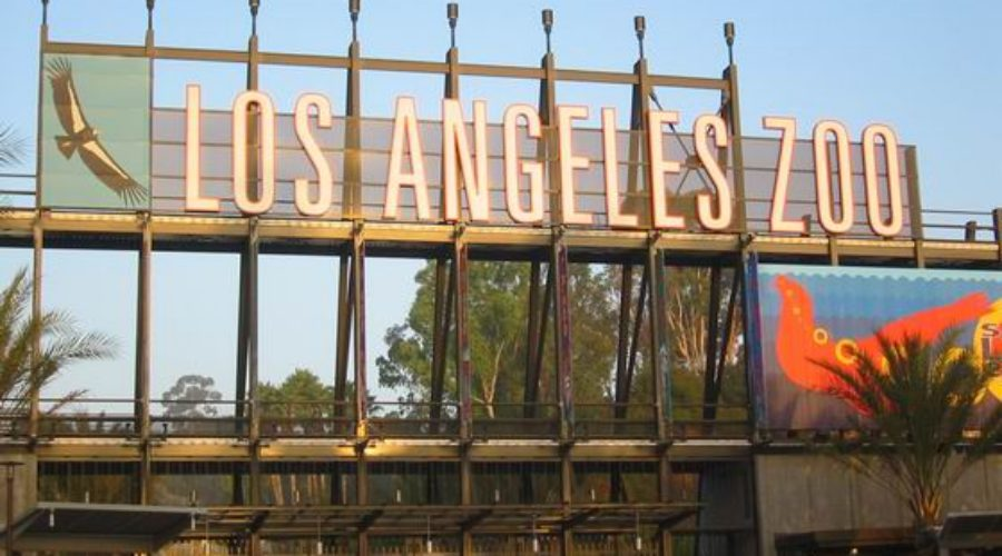 Los Angeles Zoo hunts for Ad Agency for 2013