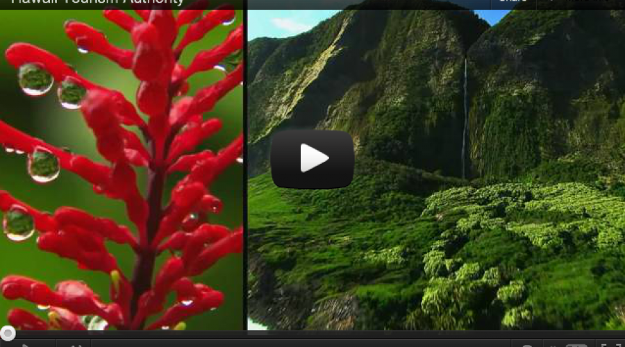 Cowabunga!! Hawai'i Tourism in Review