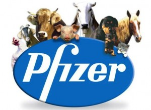 new business pfizer2