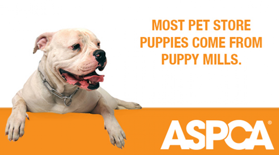 Puppy video assignment from the ASPCA