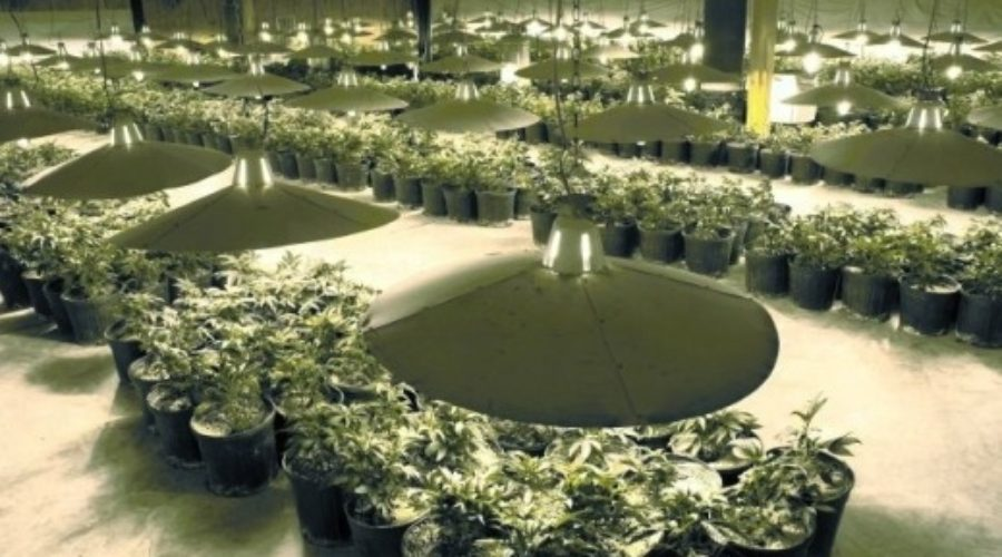 A new category to pitch: Marijuana