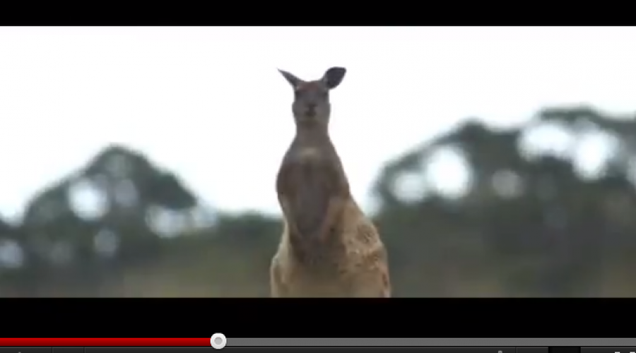 South Australian Tourism Commission adventures into ad review