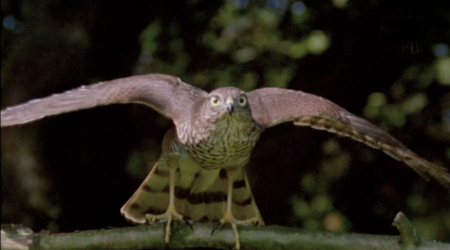In review: The Royal Society for the Protection of Birds