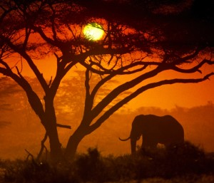 Kenya Tourism Board issues RFP