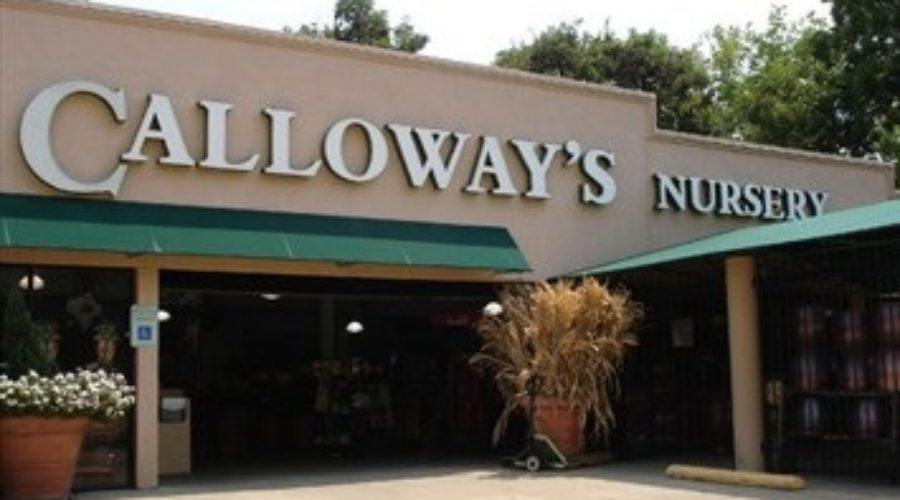 New Marketer at Calloway's and Cornelius Nursery