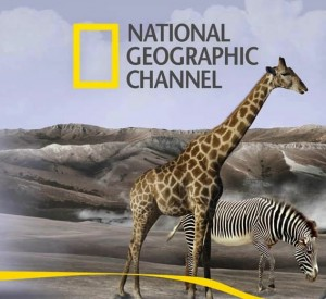 National Geographic & Nat Geo Wild channel's seek CMO