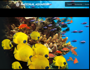 National Aquarium is diving for a new CMO
