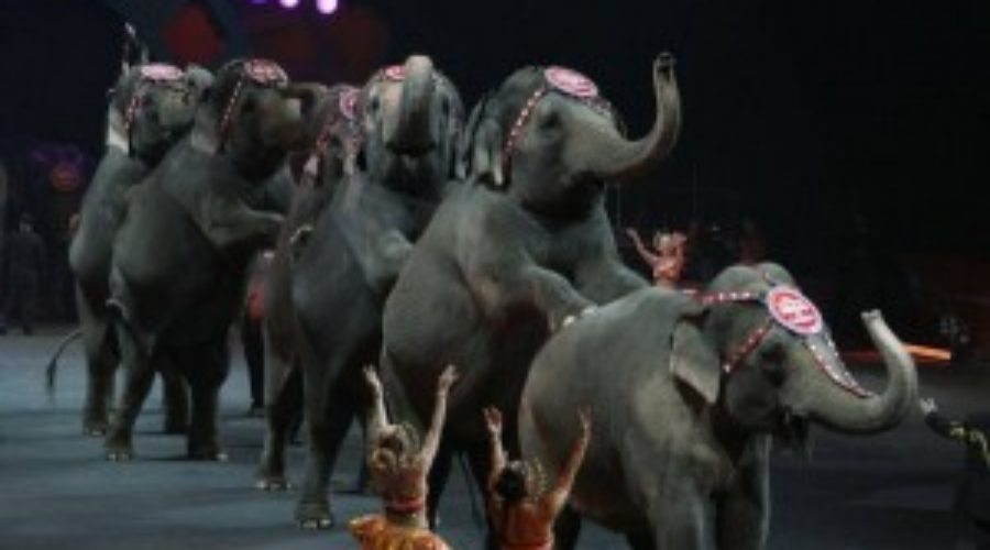 The Greatest Show On Earth's Next Act: Reinvention in a Post-Elephant World