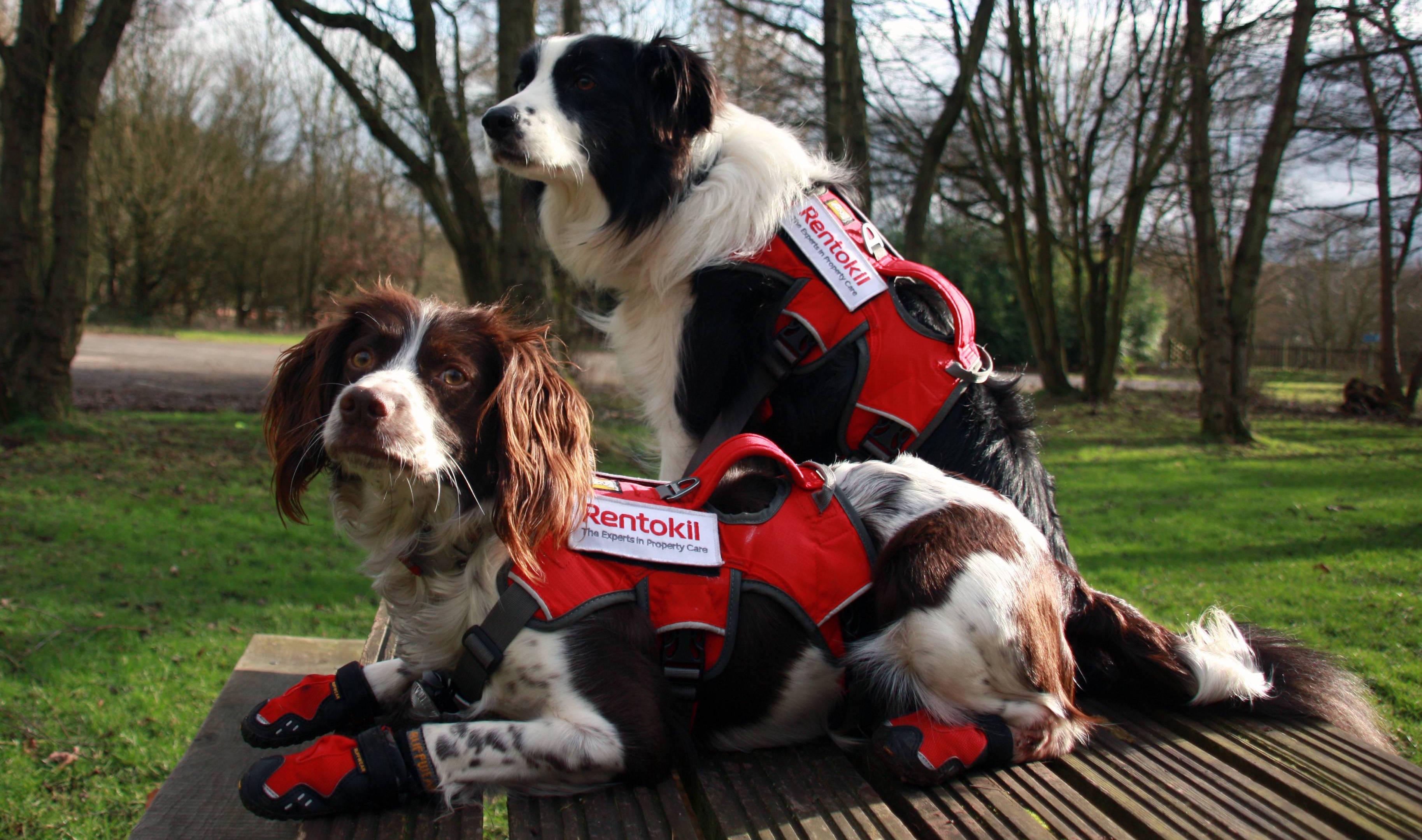 M-and-J-Rentokil-1-Enviro-dogs-Meg-and-Jess