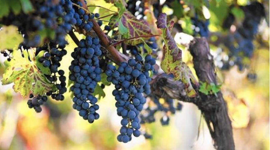 RFP: Virginia Wine Board