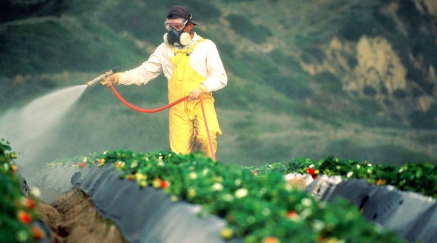 Rounding up the mess of RoundUp at Monsanto
