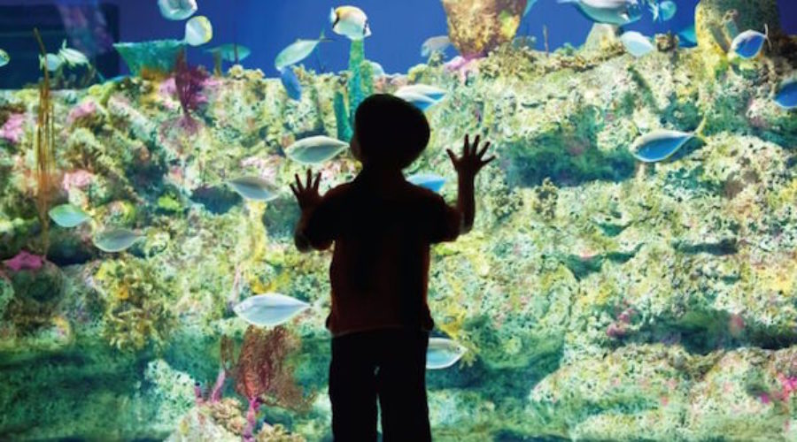 Aquariums & Zoo marketing RFP