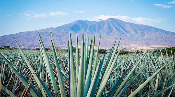 Tequila brands to watch in 2018