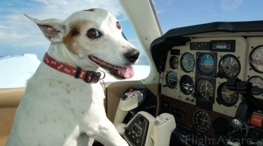 Maybe dogs should fly themselves . . .