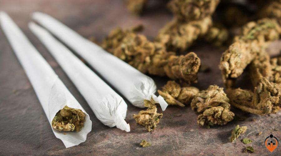 Serious Cannabis Client Cash
