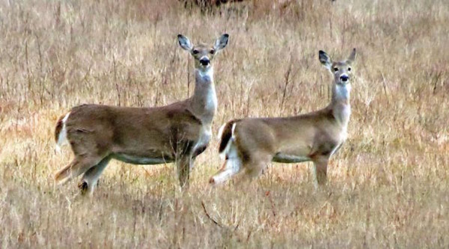 Parks & Wildlife Department Issues Multicultural RFP