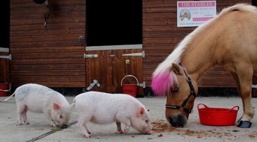 Ponys and Pigs and Brits = Two new accounts to pitch