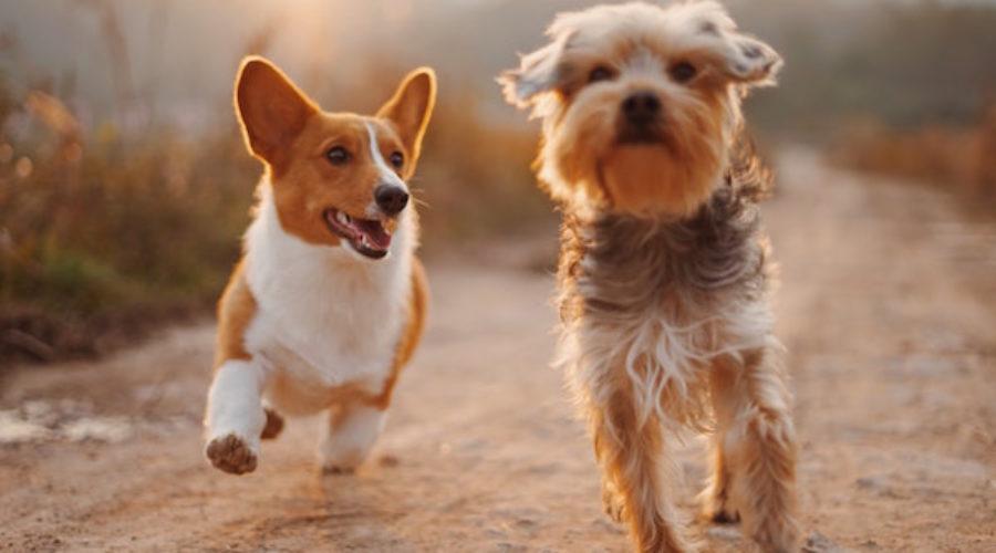 Pet account alert!