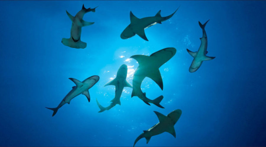 Ad agency closes & the sharks start circling