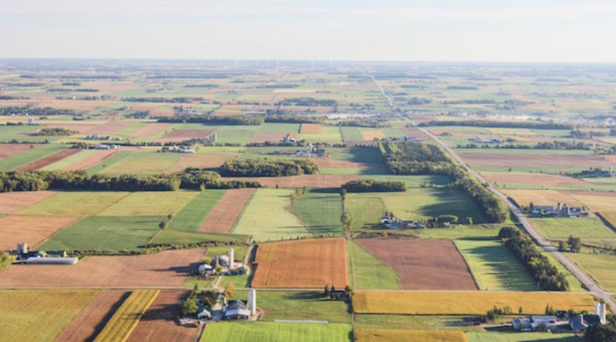 Marketing Strategy Sought for Essential Crop: RFP
