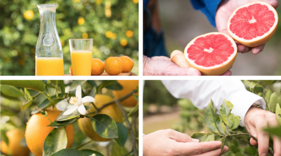 Promoting Citrus in Canada: RFP