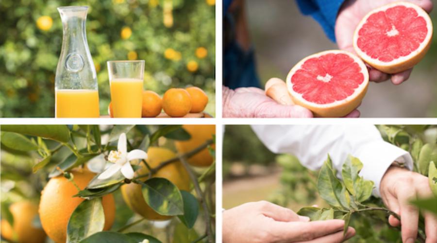 Promoting Citrus in Canada: RFP