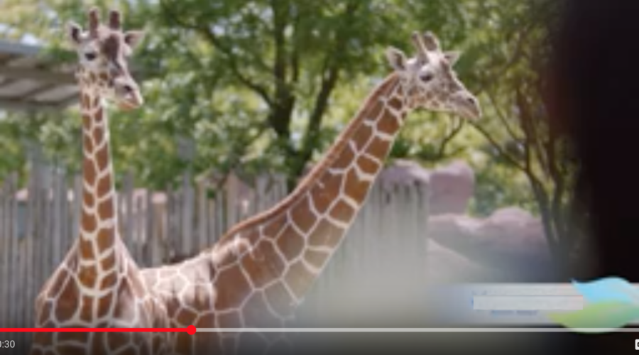 Zoo Seeks Email Marketing Agency
