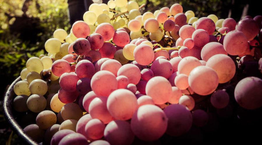 Low-calorie, low-alcohol wine launch