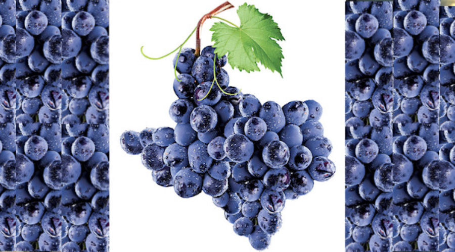 State Wants to Tout its Wine Business: RFP
