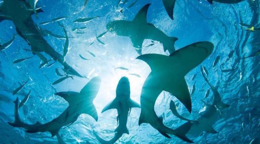 Sharks are circling this agency's clients