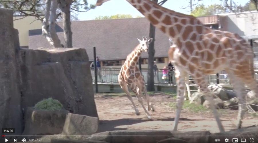 County Zoo seeks Website Redesign
