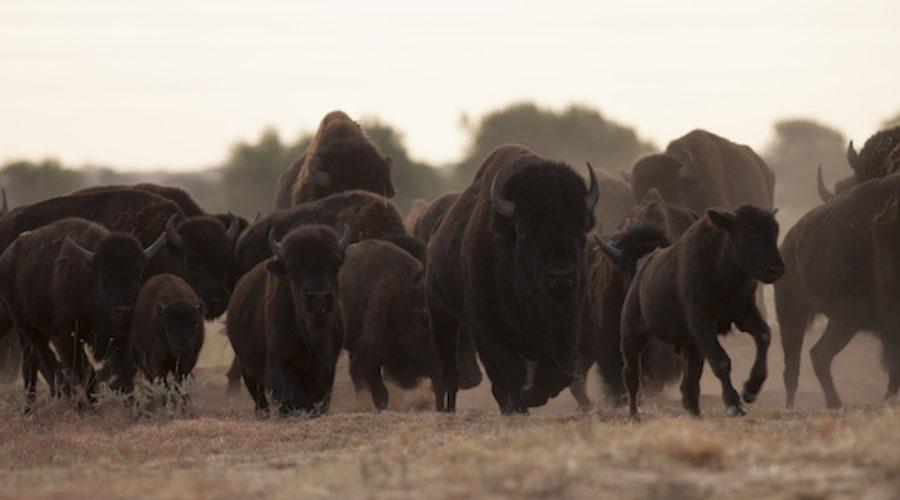 Parks & Wildlife Department Marketing Pitch